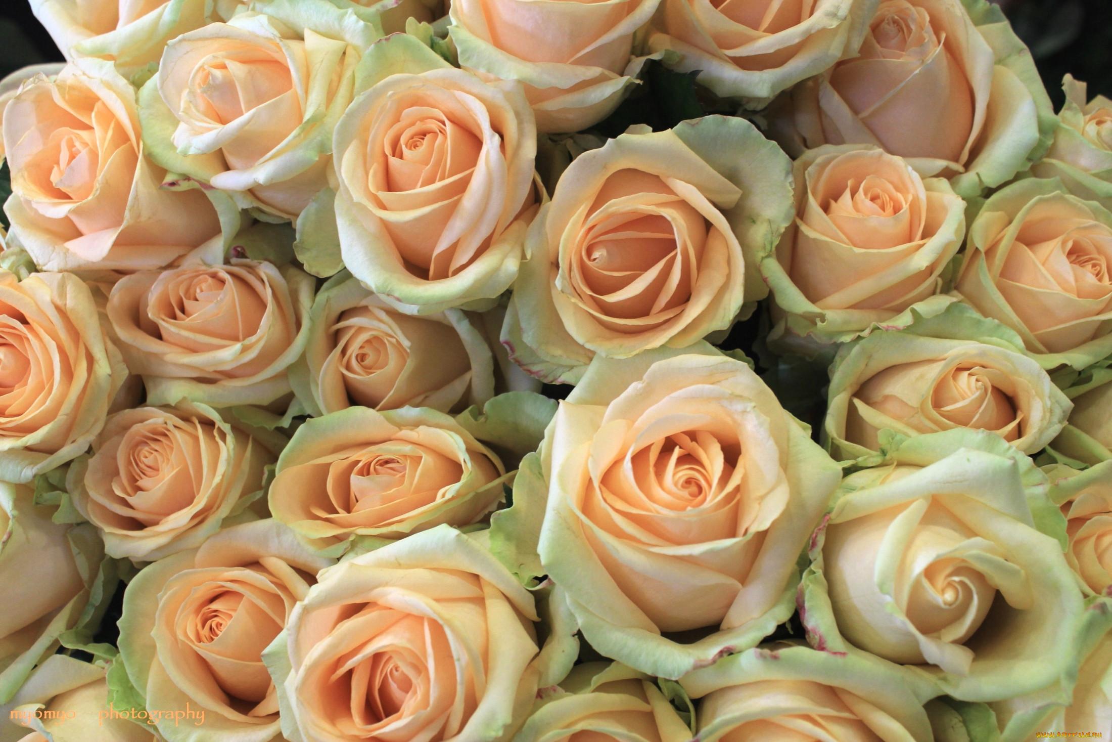 картинки где много розы попросту держать